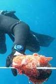 Υποβρύχιο κυνήγι